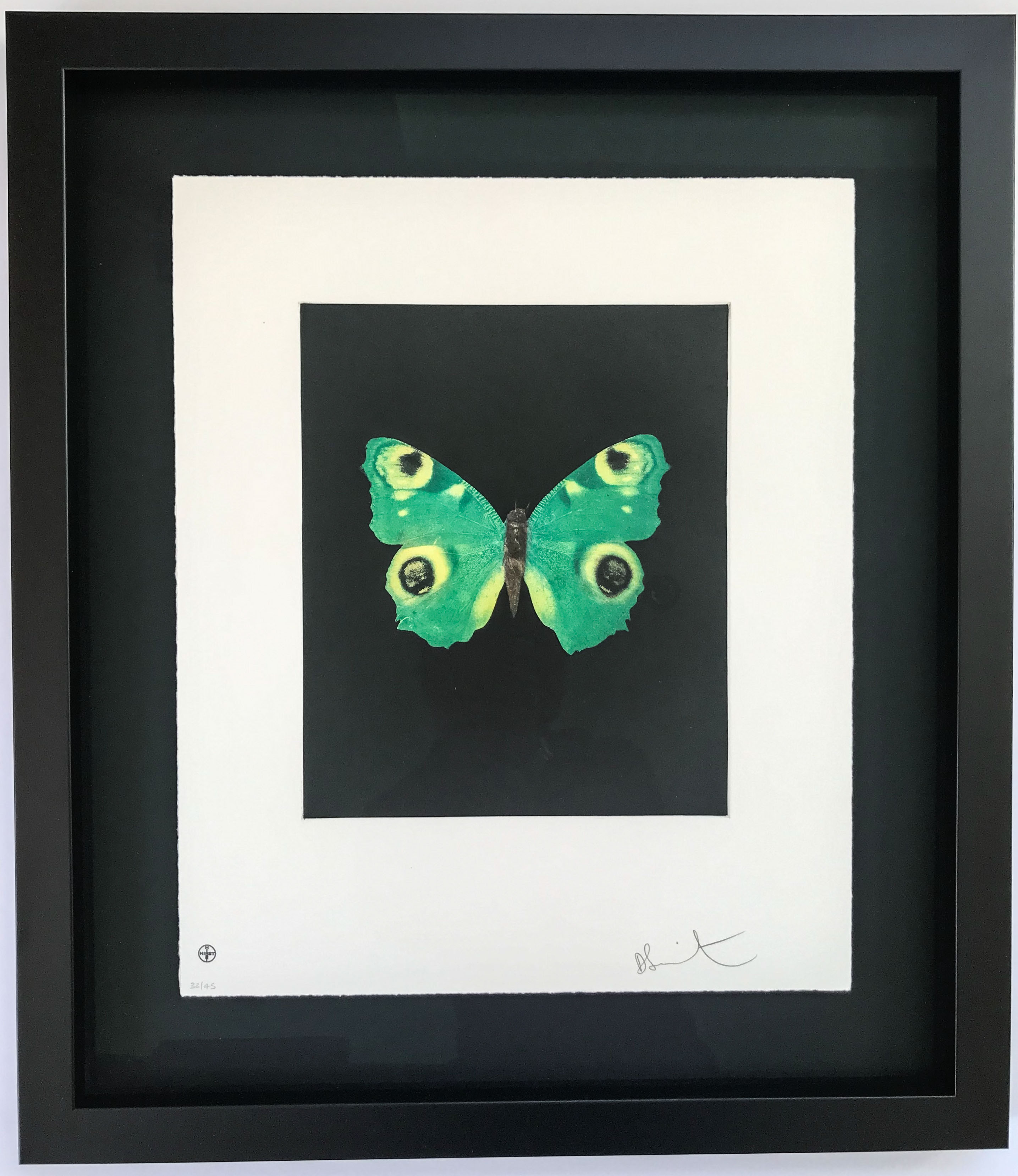 Butterfly print floated | Framed by Jules Sainter of Lovingly Framed